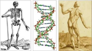 images of skeletons and DNA