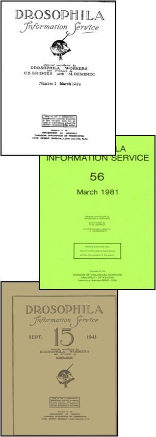 how to use a journal jim rohn pdf