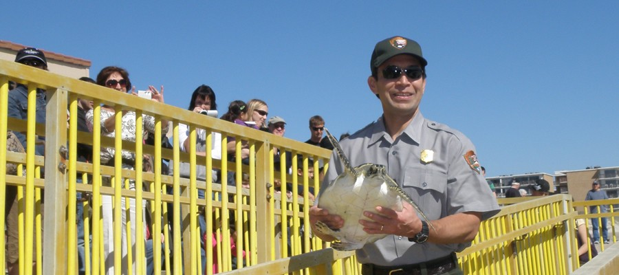 A park ranger carries a sea turtle to the Gulf of Mexico on Malaquite beach near the visitor center of Padre Island National Seashore near Corpus Christi, TX as part of a cold stunning release event.