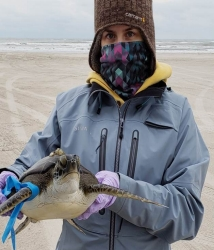 An undergraduate research assistant, Jennifer Williams, with the Conrad Blucher Institute at the Texas A&M University-Corpus Christi holds a rescued sea turtle near Corpus Christi, TX.
