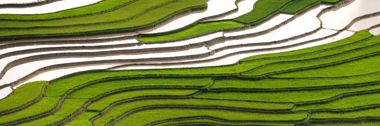 Aerial photo of rice terraces