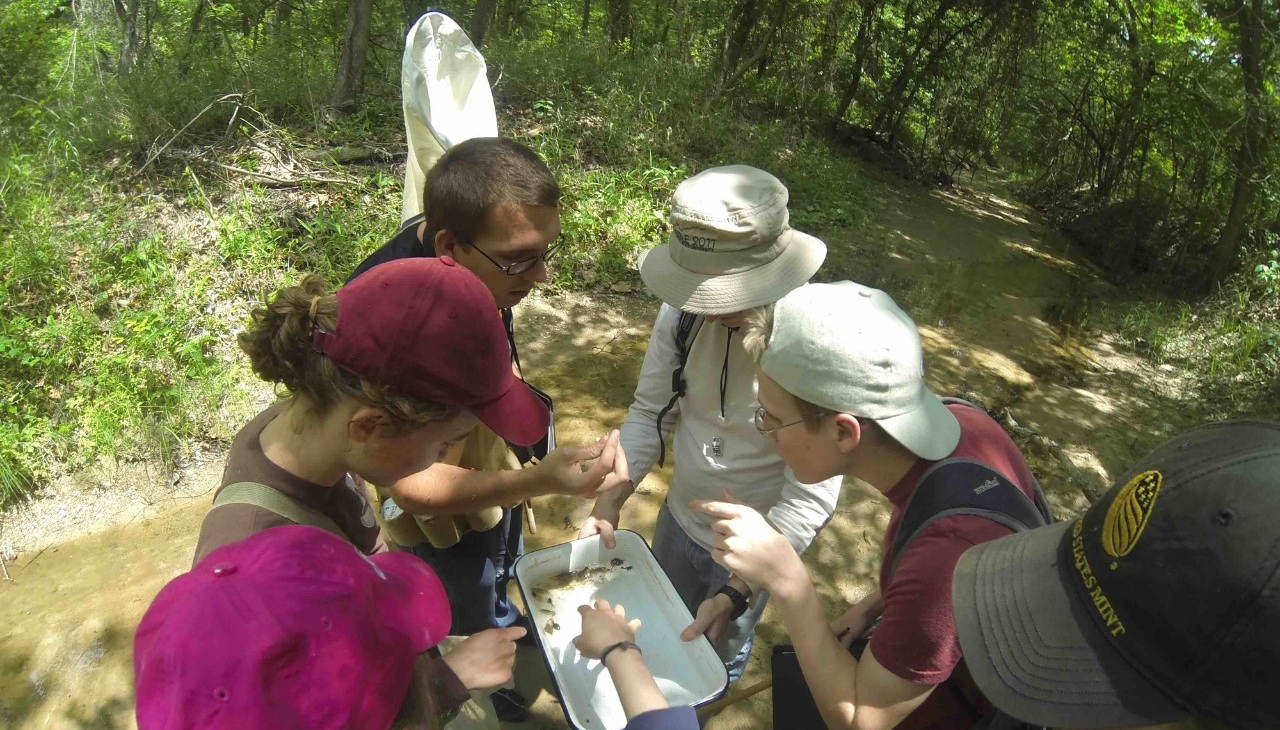 Insect Ecology class at stream