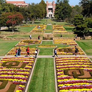 Mums on South Oval